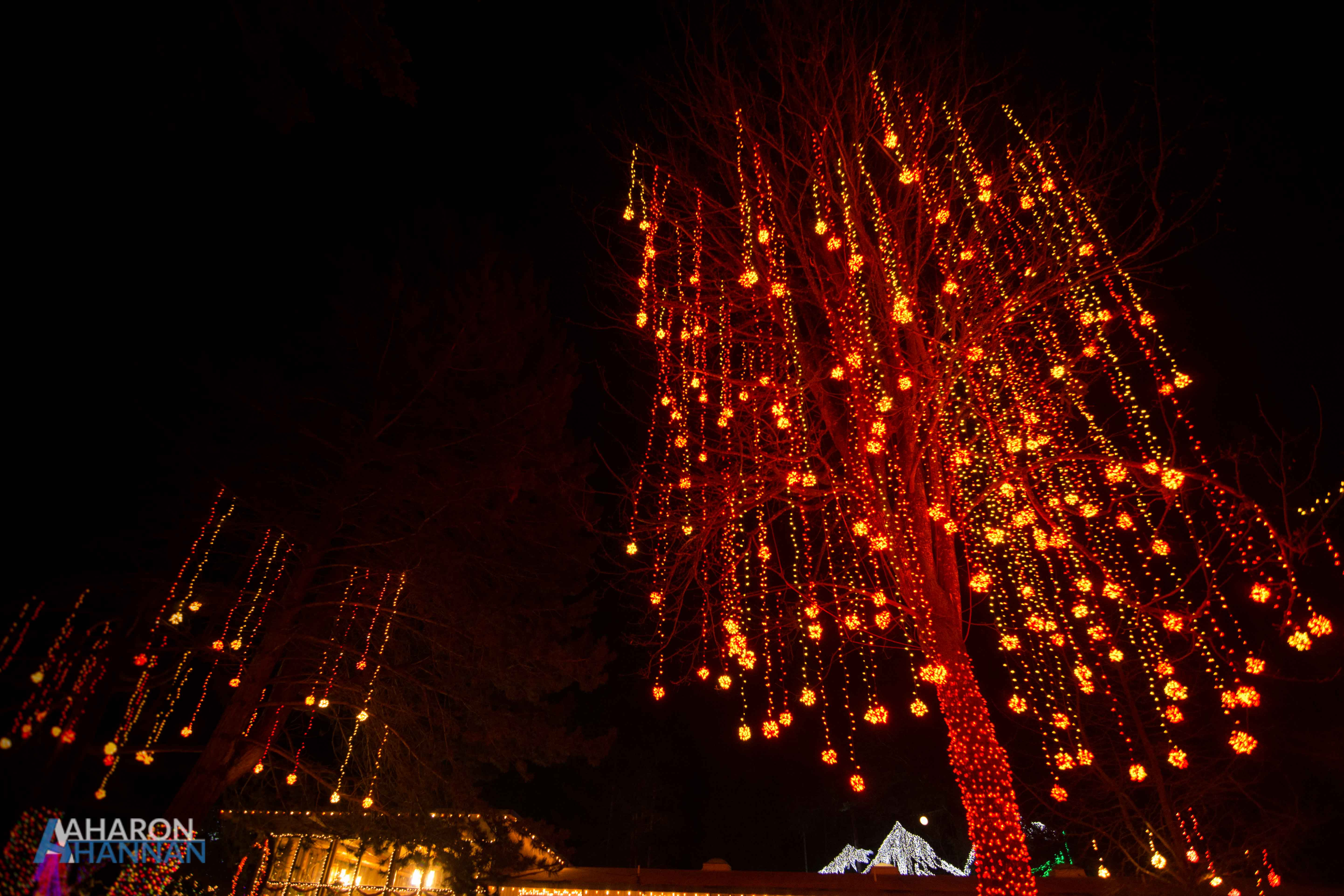 AHM-Lights-Of-Christmas-Festival-61.jpg